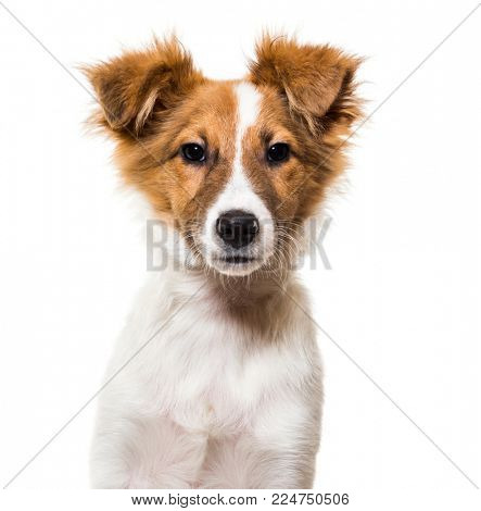 Mixed-breed dog against white background