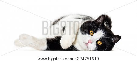 Mixed breed cat lying down against white background