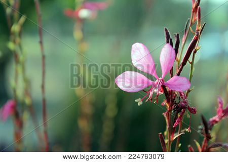 macro flower pink purple nature springy day