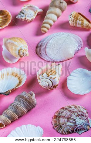 different sea shells on a pink background. The scenery on the sea and ocean