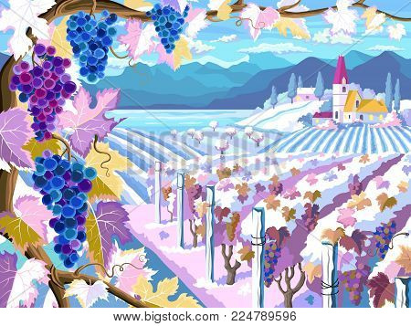 Rural landscape with vineyard, grapes bunches, fields and  sea. Four seasons. Winter season. (Other seasons in the my portfolio).