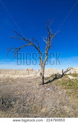 old dead tree, in Ampudia village, Palencia, Castile Leon, Spain, Europe