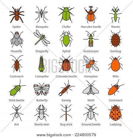 Insects color icons set. Bugs. Entomologist collection. Butterfly, earwig, stag bug, phasmid, moth, ant, mantis, spider. Isolated vector illustrations