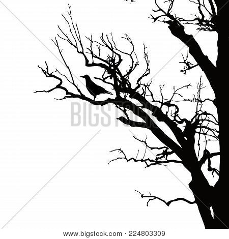 realistic vector silhouette of sitting raven on dry tree branch, isolated on white background
