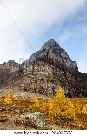 Base of Mount Temple among the golden Larch trees toward the ascend to Sentinel Pass at Lake Louise in Banff National Park, Alberta.