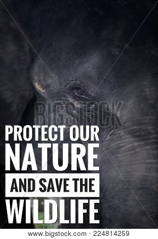 Nature and wildlife awareness concept - Protect our nature and save the wildlife. With blurred vintage styled background of an elephant face.