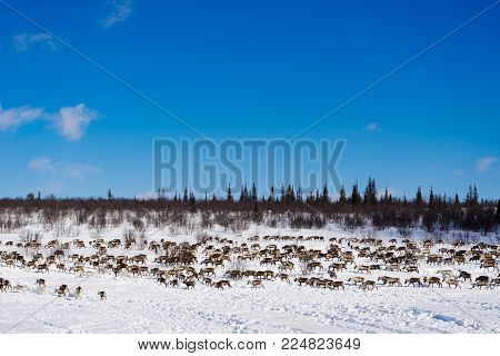 a herd of deer against the background of a snow-covered field