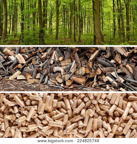 Steps of production wood pellets for heating systems.