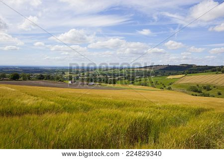 a hilltop golden barley field overlooking the vale of york with summer scenery under a blue sky in the yorkshire wolds