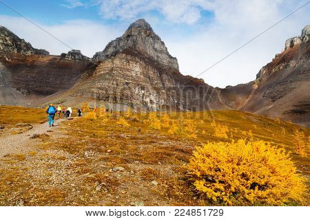 Hikers walking along the base of Pinnacle Mountain among the golden Larch trees toward the ascend to Sentinel Pass at Lake Louise in Banff National Park, Alberta.