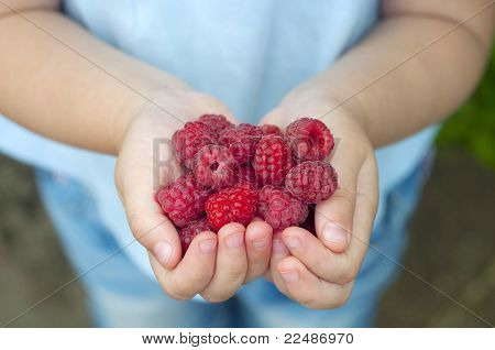 Raspberries In The Child's Hands
