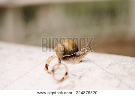 A Small Snail On The Concrete Floor Carries Two Wedding Rings On The Armor