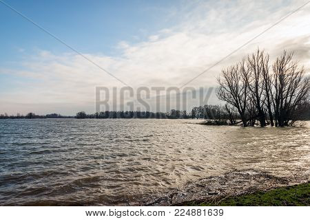 Flooded Dutch polder on a cloudy winter day. In the background the silhouette of a tree is contrasting with the sky.