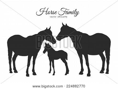 Vector illustration: Silhouette of horses family isolated on white background.