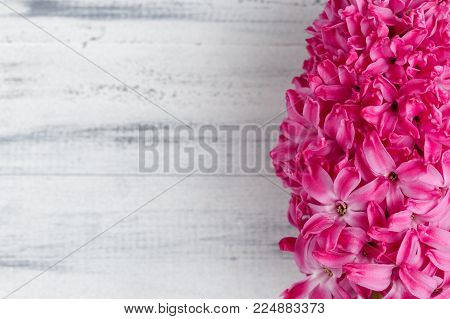 Whitewashed wooden background with pink hyacinth flower. Copy space for your text