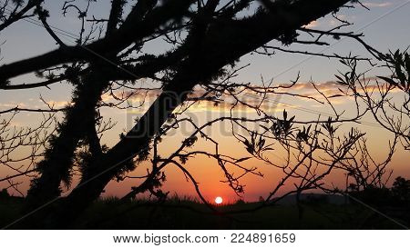 Sunset at dusk with tree in the city of Porto Alegre