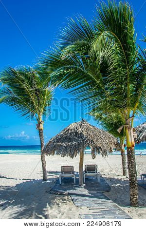Palm trees, palapa and lounge chairs on the beach. Dominican Republic.
