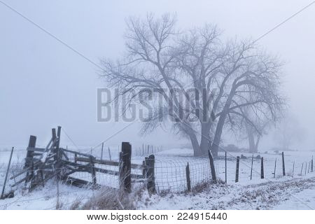 Fog rolls over the barren trees and rickety split rail fencing out in the countryside