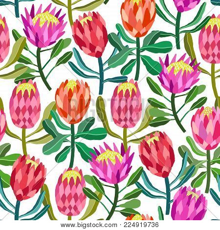 Protea flower vector seamless pattern on white