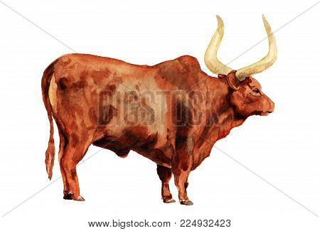 Watercolor image of ox on white background