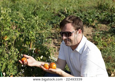 Man Looks At Tomato