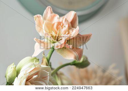 Flowers in big glass vase. Beautiful Blossoms of Amaryllis flower. Wild flowers - Hippeastrum. Vintage background.