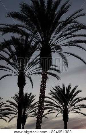 Five tall palm trees with white Christmas lights on one trunk silhouetted against a late dark evening sky with sparse clouds, creating a moody scene.