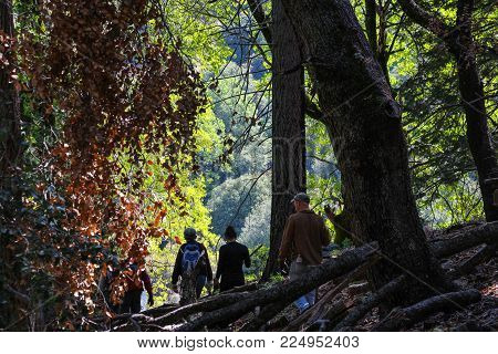 Palomar Mountain State Park, San Diego County, California, USA - April 27, 2014 - Several silhouetted hikers on the Thunder Springs trail, walking through a beautiful oak and pine woodland with sunlight on green foliage.