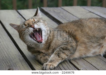 Yawning Cat Laying On A Deck