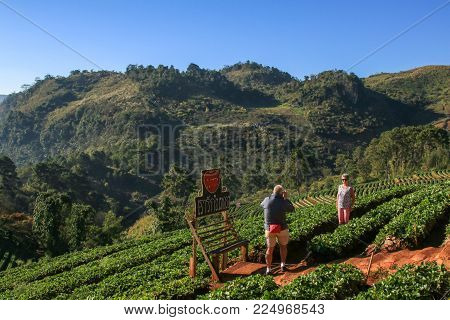 CHIANG MAI, Thailand - 19 January 2018 : Tourists taking pictures at Strawberry field,chiang mai, Thailand.