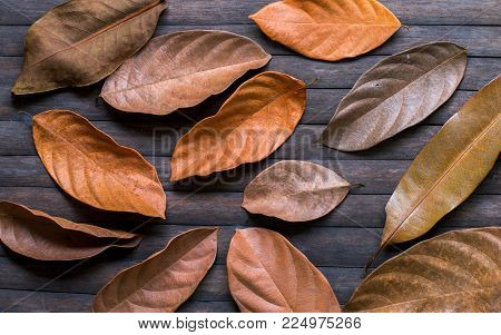 Orange leaves on wooden background. Autumn seasonal banner template. Old dry leaf ornament on wooden table. Rustic flat lay with dry leaf decor. Golden brown leaf texture. Fall seasonal top view photo