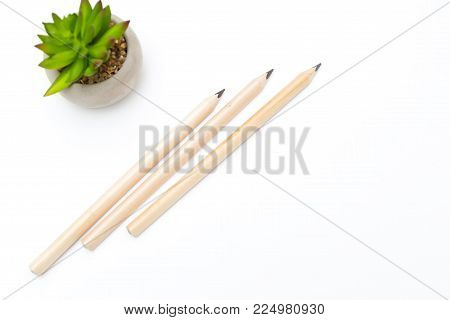 Three pencils and a succulent flower in a flowerpot on a white wooden background. Copy space