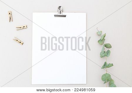 Card mock up and eucalyptus flower on gray background. Flat lay