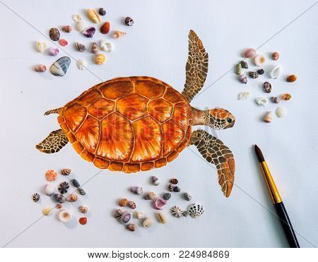 Sea Turtle Water Color Drawing On White Paper With Sea Shells Photo. Sea Tortoise Drawing. Marine Tu
