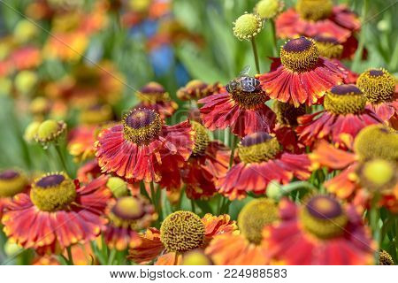 Close-up View Of Red Flowers With Blur Green Background