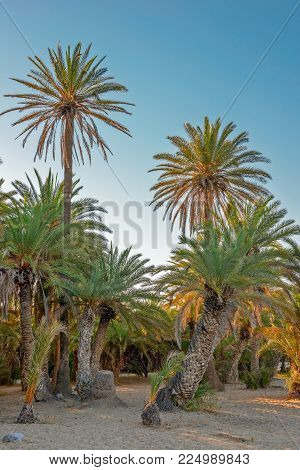 Palm Trees On Tropical Sand Beach In Sunset Light