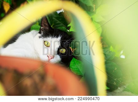 Cute cat lying on green grass lawn, shallow depth of field portrait.  Cat is hunting in the grass at summer day