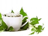 Herbal tea with flowers nettle on white background poster