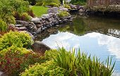 Beautiful pond with exotic fish in the garden poster