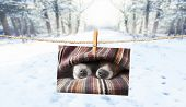 photo of dogs hanging on a string with  clothespin, cuddly and warm in winter , with snow as background poster