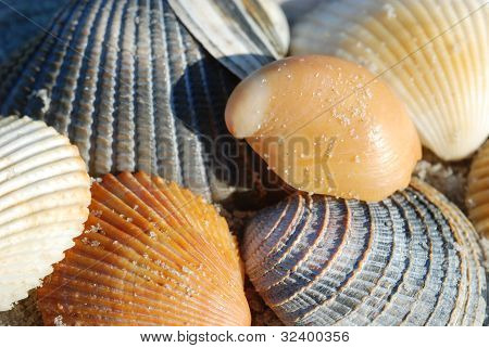 A Pile of Shells