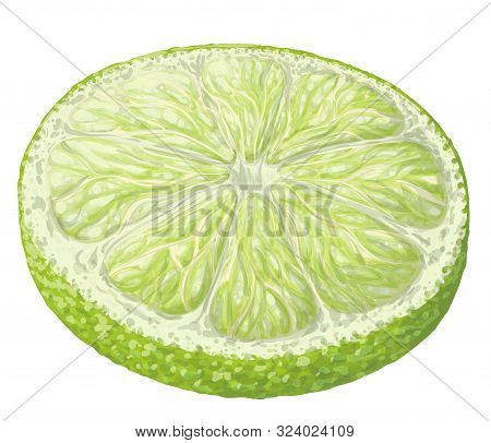 Vector Isolated Pattern Object, Hand-drawn Harvest Juicy, Delicious Rich Wet Green Lime Circle Piece