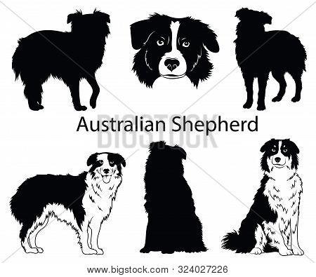 Australian Shepherd Set. Collection Of Pedigree Dogs. Black White Illustration Of A Australian Sheph