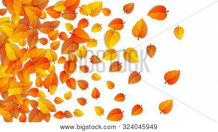 Autumn Golden Leaf Frame Template. Tree Fallen Autumn Leaves Isolated On White. October Yellow Folia