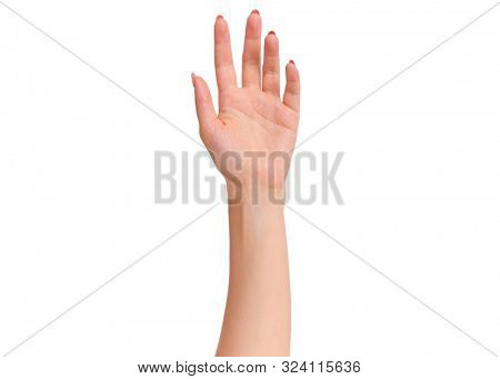 Female hand, isolated on white background. Beautiful hand of woman with copy space.
