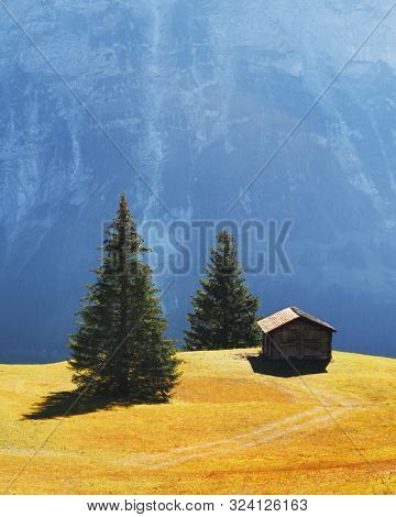 Picturesque autumn landscape with wooden cabin on green meadow and firtrees in Grindelwald village in Swiss Alps