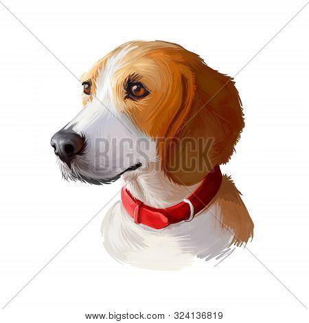 Harrier Dog Digital Art Illustration Isolated On White Background. Uniteed Kingdom Origin Scenthound