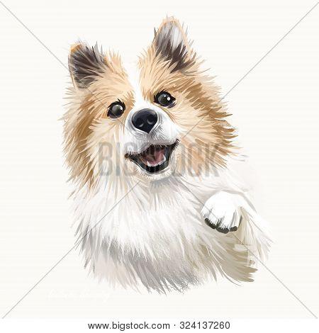Icelandic Sheepdog, Icelandic Spitz, Iceland Dog Digital Art Illustration Isolated On White Backgrou
