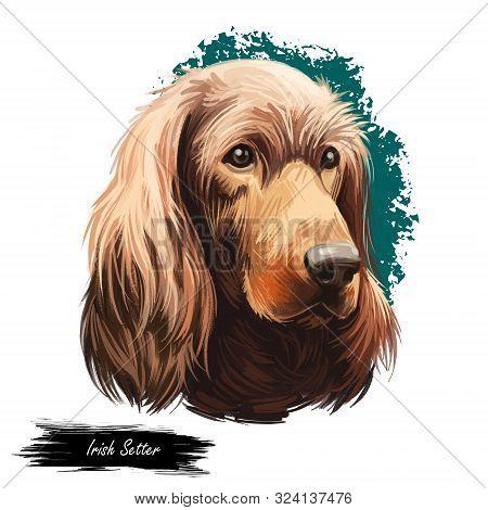 Irish Setter, Red Setter, Irish Red Setter dog digital art illustration isolated on white background. Irland origin sporting gundog dog. Pet hand drawn portrait. Graphic clipart design for web, print poster