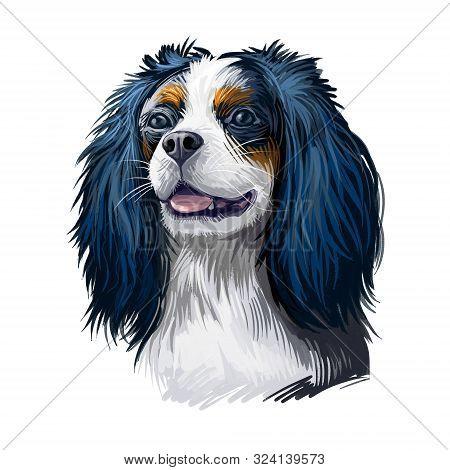 Cavalier King Charles Spaniel Dog Digital Art Illustration Isolated On White Background. Unite Kingd